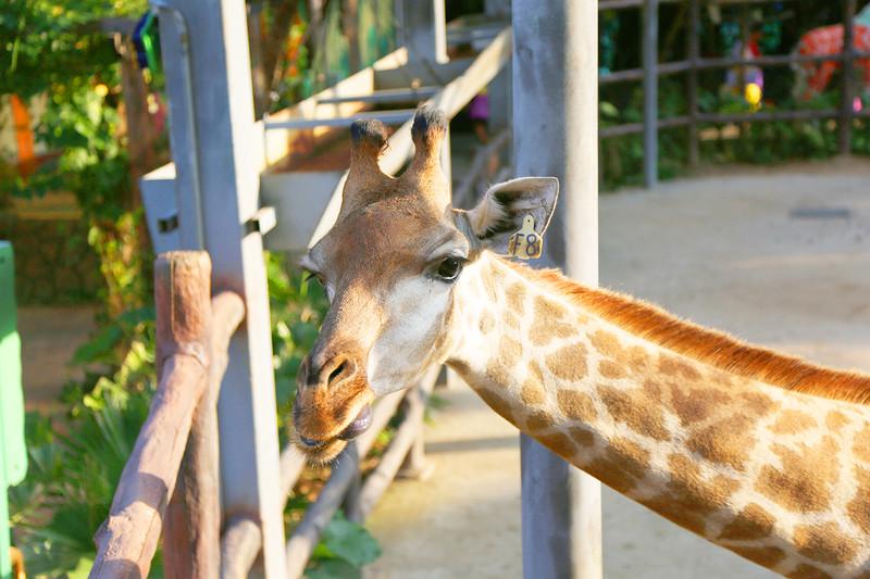 情景区还有一个彩色动物园,早在找吃的的时候就发现有个人在玩着小猴
