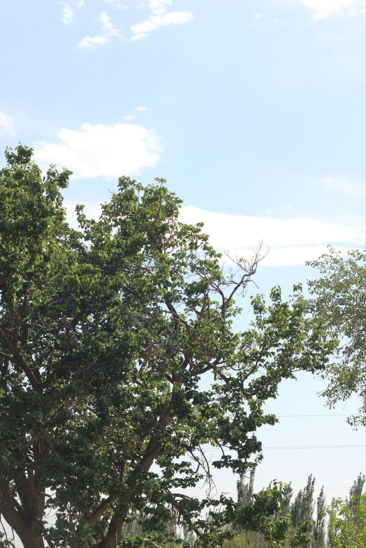 喀什果园风景图片