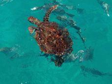 大堡礁-昆士兰-ri****12